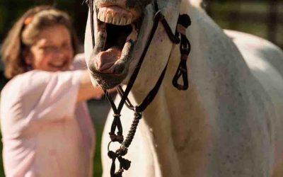 Enge energetische Beziehung zwischen Pferd und Mensch